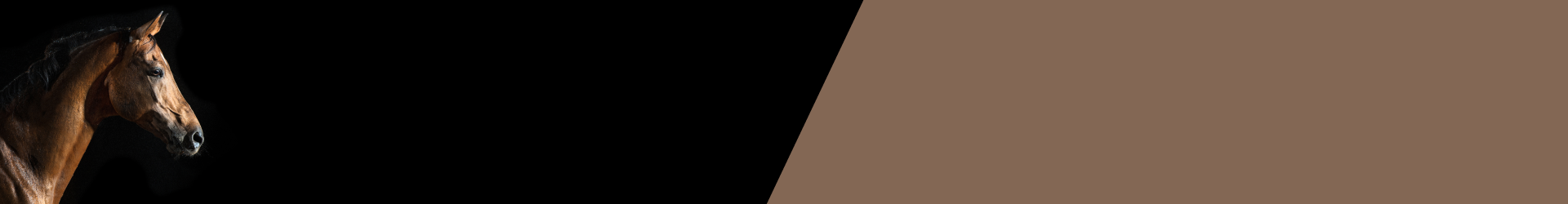 horse products banner